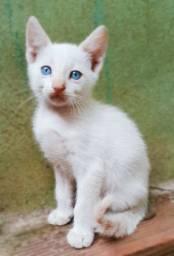 Doação de filhotes de gato branco