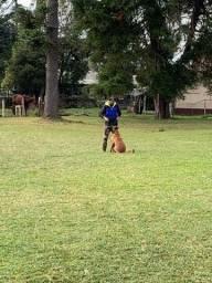 Adestramentos para cães