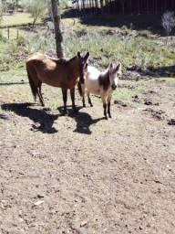 Égua e potranca