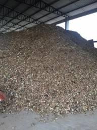 Cavaco de madeira seca