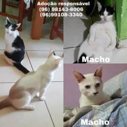 Gatos machos para adoção