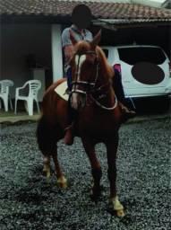 Cavalo Montaria (Potro) 2,8 ANOS