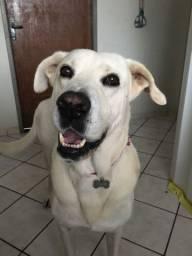 Cachorro pra adoção responsável!!