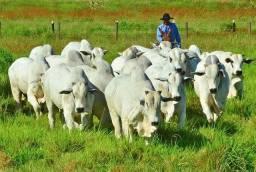 Fazenda com 15 Mil Hectares Mato Grosso
