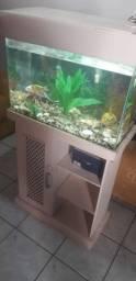Vendo aquário completo - sem peixes