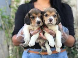 Beagle, o de 13 polegadas adquira conosco!