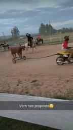 Vendo cavalo ou troco