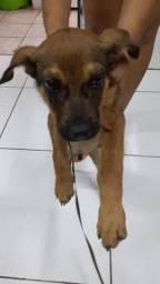 Cachorro de raça 3 meses