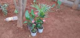 Plantas mudas JM LTDA