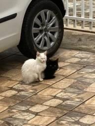 Doa-se duas gatinhas filhotes