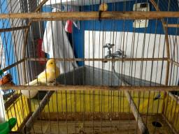 Vendo gaiola super conservada