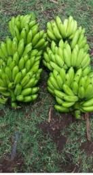 Banana in natura VERDE