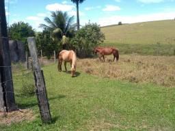 Vendo um cavalo e uma égua