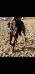 cavalo de prado