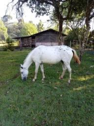 Cavalo égua e um potro