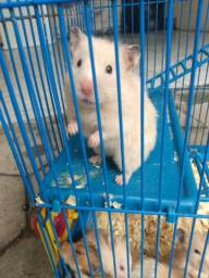 Hamsters filhote