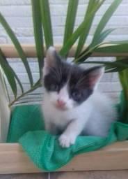Estou doando esse gatinho