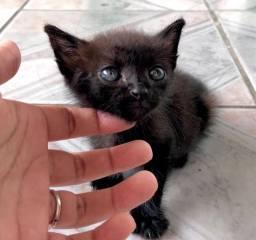 Doação de gatinho preto