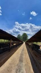 Vendo porteira fechada Fazenda 50 ha 3km do asfalto 8.000mil litros leite por dia !