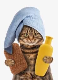 Banho do Gato