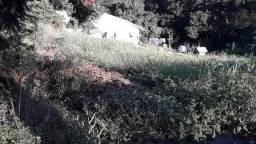 Seu Terreno em Gramado - Cod:TE00004 - Gramado/RS