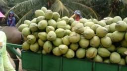 Venda de coco verde e coco seco