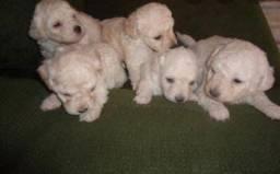 Doação de cachorrinhos!!
