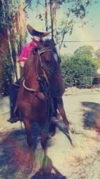 Cavalo mestiço mangalarga