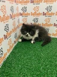 Gato Persa é no Da Madre Pet Shop