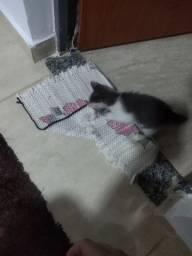 Filhote de gato macho