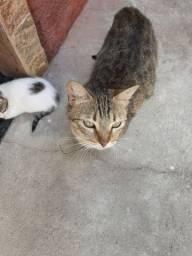 Doação de gatinhos.
