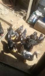 10 patos