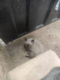 Gato para adoção 2 meses aproximadamente