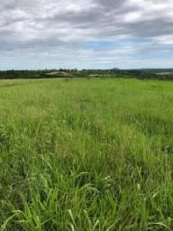 Fazenda de 500 hectares. Camapuã. MS