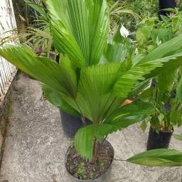 Variedades  de plantas