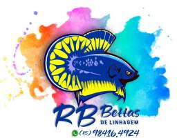 RB BETTAS