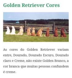 Golden Macho disponível pra cruzar