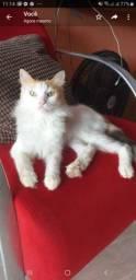 Recopensa pra quem.achar minha gatinha Mimi