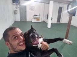 Adestrador de cães - Resolvo problemas e ensino truques!