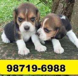Canil Filhotes Cães BH Top Beagle Maltês Basset Shihtzu Yorkshire Poodle Bulldog Lhasa