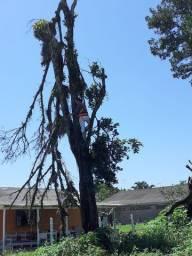 Podas e cortes de árvores