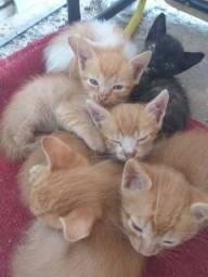 Gatinhos lindos para adoção