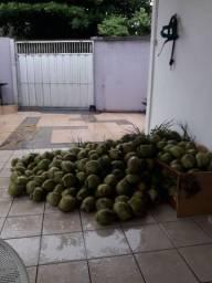 COCÔ para ÁGUA e seco