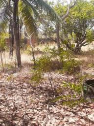 Terreno na precabura, Eusébio.