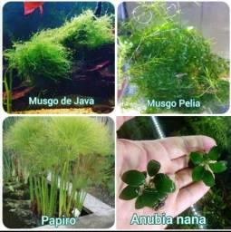 Plantas para lagos e Aquarios