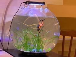 Vendo aquário redondo SÓ O VIDRO