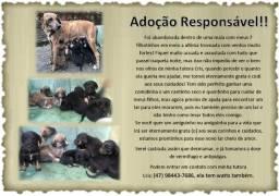 Adoção / Doação responsável