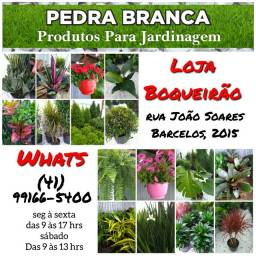 Plantas ornamentais