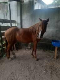 Cavalos agropecuários