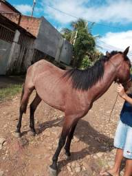 Um cavalo